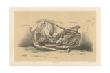 The Pelvis. First Side View of the Male Pelvis, with the Muscles Bounding it Below Giclee Print by G. H. Ford