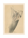 The Lower Limb. The Superficial Parts of the Groin, and the Fascia Lata at the Top of the Thigh Giclee Print by G. H. Ford