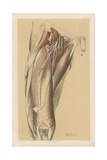 The Lower Limb. Deep View of the Fore and Outer Parts of the Thigh Giclee Print by G. H. Ford