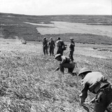 Sappers of the 237 Field Company, Royal Engineers, Clearing a Minefield in the Aftermath of the… Photographic Print by  English Photographer