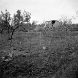 Minefield, Near the Top of Licolle Ridge, c.1944 Photographic Print by  English Photographer