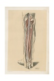 The Lower Limb. Deep Dissection of the Back of the Leg Giclee Print by G. H. Ford