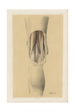 The Lower Limb. Common View of the Popliteal Space with its Contents Giclee Print by G. H. Ford