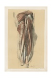 The Lower Limb. A Representation of the Back of the Thigh Giclee Print by G. H. Ford