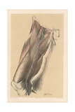 The Lower Limb. Surface View of the Thigh, with the Cutaneous Nerves and Vessels Giclee Print by G. H. Ford