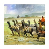 Herds of Llamas in the Andes Giclee Print by Ferdinando Tacconi