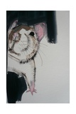 Rat, 2010 Giclee Print by Sally Muir