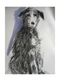 Deerhound, 2012 Giclee Print by Sally Muir
