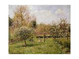 Spring at Eragny; Printemps a Eragny, 1900 Giclee Print by Camille Pissarro