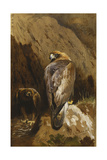 Golden Eagles at their Eyrie, 1900 Giclee Print by Archibald Thorburn
