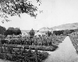 Monet's Garden, Giverny, c.1908 Photographic Print by  French Photographer