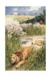 The Boers of the Party Boldly Tackled a Lion and Lioness Giclee Print by Walter Stanley Paget