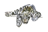 Arabian Leopard, 2008 Giclee Print by Mark Adlington