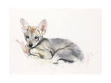 Curled Arabian Wolf Pup, 2009 Giclee Print by Mark Adlington
