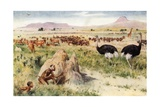 A South African Plain: Before the Coming of the White Man Giclee Print by Walter Stanley Paget