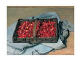 Basket of Cherries, 1921 Giclee Print by Felix Edouard Vallotton