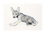 Adolescent Arabian Wolf Pup, 2009 Giclee Print by Mark Adlington
