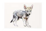 Hesitating Arabian Wolf Pup, 2009 Giclee Print by Mark Adlington