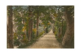 Addison's Walk, Oxford. Postcard Sent in 1913 Giclee Print by  English Photographer