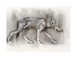 Lean Pup (Arabian Wolf), 2009 Giclee Print by Mark Adlington