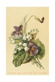 Violet and Lily of the Valley Giclee Print by  English School