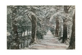 Addison's Walk, Magdalen College, Oxford. Postcard Sent in 1913 Giclee Print by  English Photographer