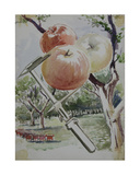 Apple Measure, 1955 Giclee Print by Galina Konstantinovna Shubina