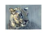 Predator II (Arabian Leopard), 2009 Giclee Print by Mark Adlington