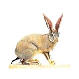 Cape Hare, 2010 Giclee Print by Mark Adlington