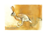 Cape Hare, 2010 Giclee Print by Mark Adlington