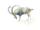 Nubian Ibex, 2008 Giclee Print by Mark Adlington