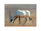Arabian Oryx, 2010 Giclee Print by Mark Adlington