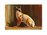 Arabian Caracal, 2010 Giclee Print by Mark Adlington