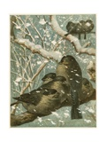 Sparrows in the Snow Giclee Print by  English School