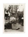 Lion Tué À La Mission de Luashi, c.1940 Giclee Print
