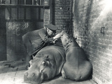 Common Hippos Jean and Jimmy with Keeper Ernie Bowman, at ZSL London Zoo, March 1927 Photographic Print by Frederick William Bond
