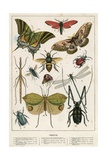 Insects Giclee Print by  English School