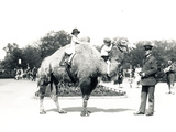 A Camel Ride at ZSL London Zoo, September 1928 Photographic Print by Frederick William Bond