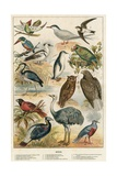 Birds Giclee Print by  English School