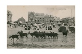 Mers - a Part of the Beach. Postcard Sent in 1913 Giclee Print by  French Photographer