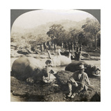 Result of a Morning's Hippopotamus Hunt on Mlembo River, Rhodesia, Africa, 1910 Photographic Print by  Keystone View Company