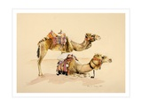 Camels from Petra, 2007 Giclee Print by Alison Cooper