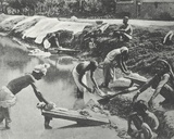 Dhobies Washing Clothes, Cawnpore, January 1912 Photographic Print by  English Photographer