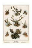 Deer Family Giclee Print by  English School