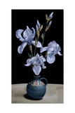 Irises, 2010 Giclee Print by James Gillick