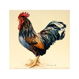 George's Cockerel, 2007 Giclee Print by Alison Cooper