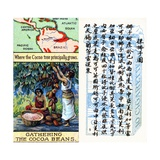 Principal Areas for the Production of Cocoa, from the Series of 'Products of the World' Cigarette… Impressão giclée