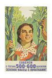 Let Us Harvest 500-600 Metric Centners of Corn Cobs on Each Hectare, 1959 Giclee Print by Vadim Petrovich Volikov