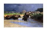 Elephants Bathing; Badende Elefanten, 1908 Giclee Print by Wilhelm Kuhnert