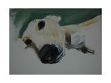 Greyhound, 2009 Giclee Print by Sally Muir